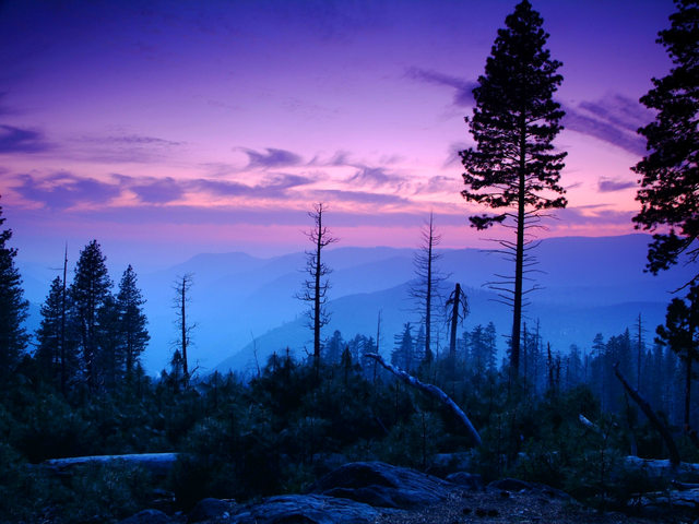 Yosemite woods at dusk