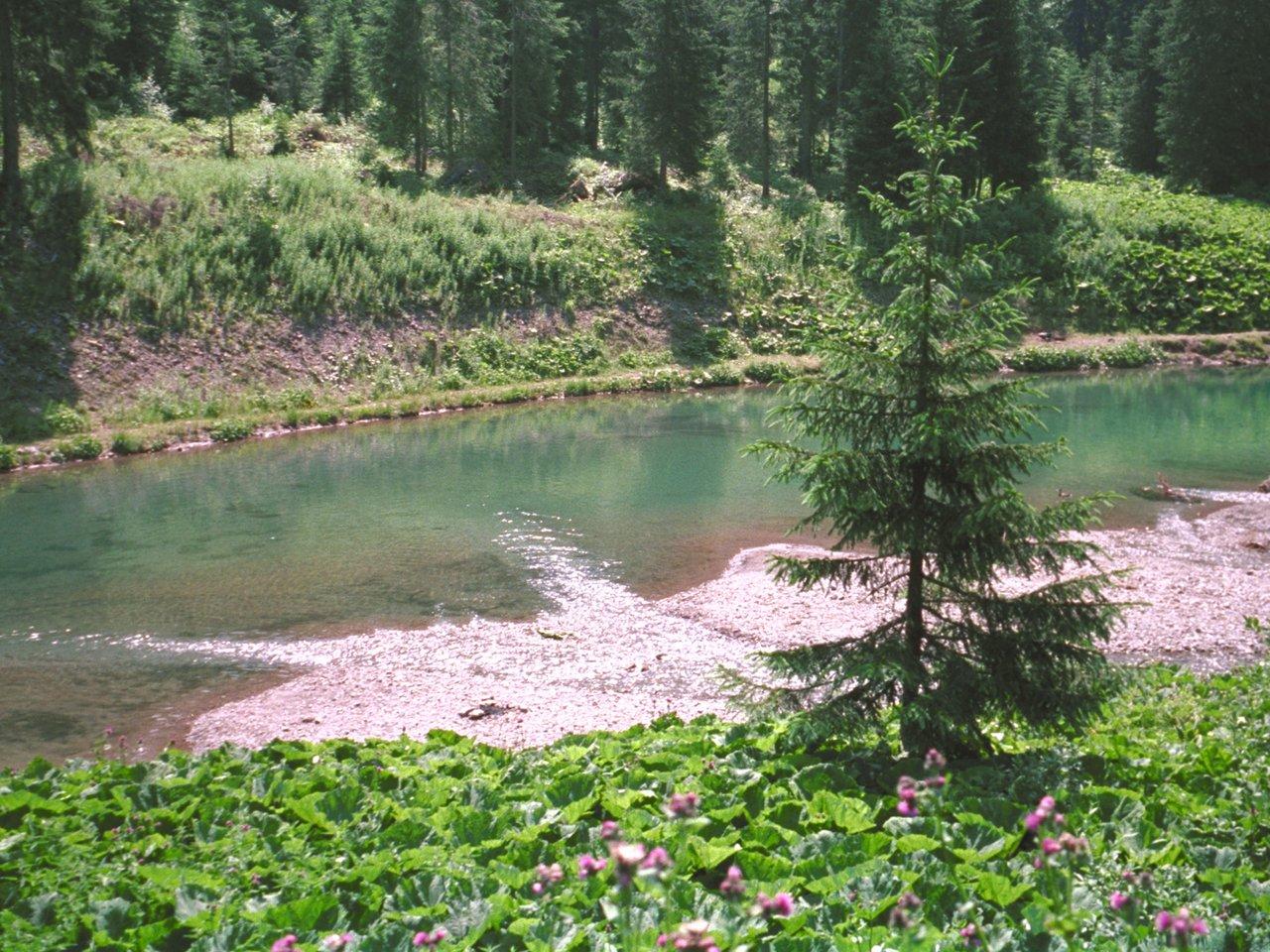Rivière dans une forêt, monthey