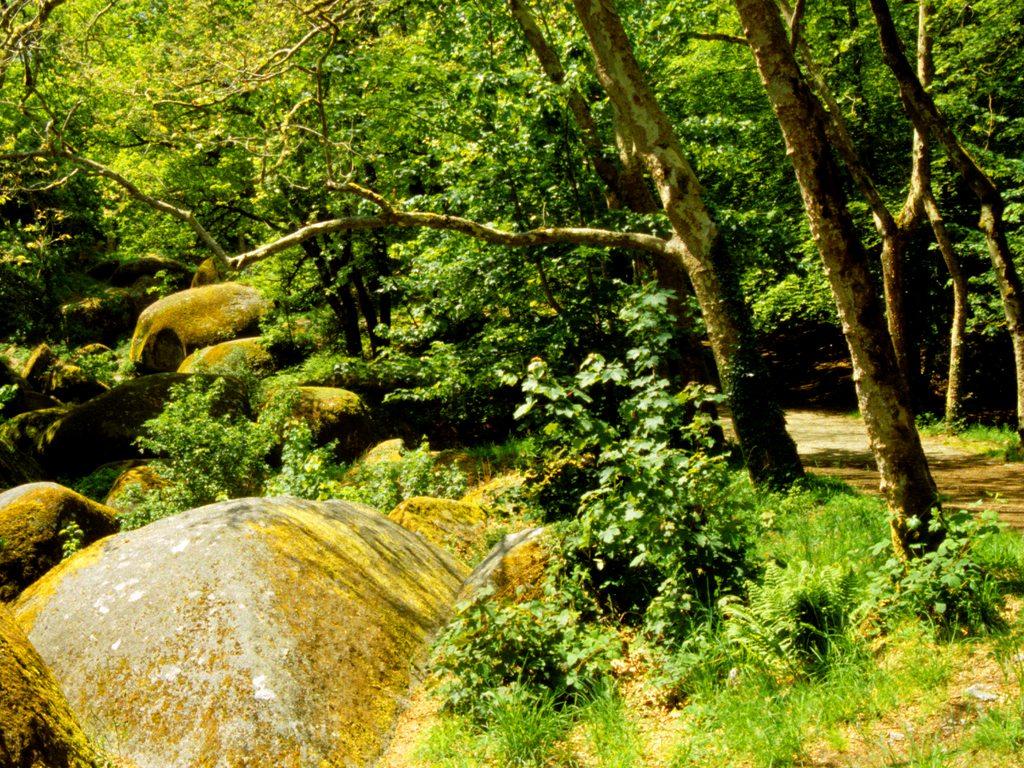 http://www.edenpics.com/pictures/003/en/1024/Edenpics-com_003-024-Great-stones-in-a-sunny-forest-France-Bretagne-Coast-of-Armor-Huelgoat.jpg