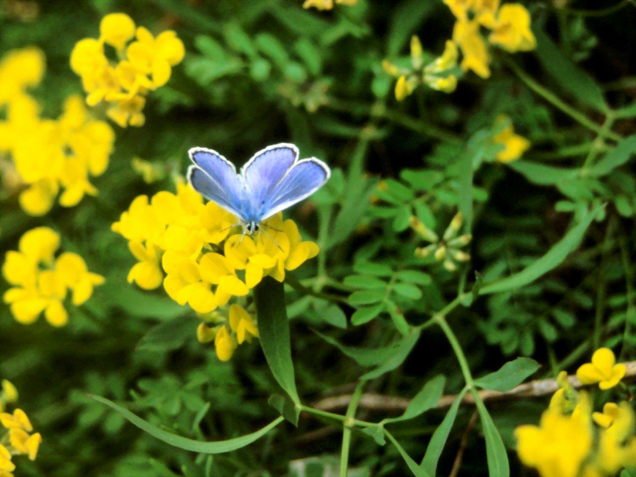 fiori gialli rari