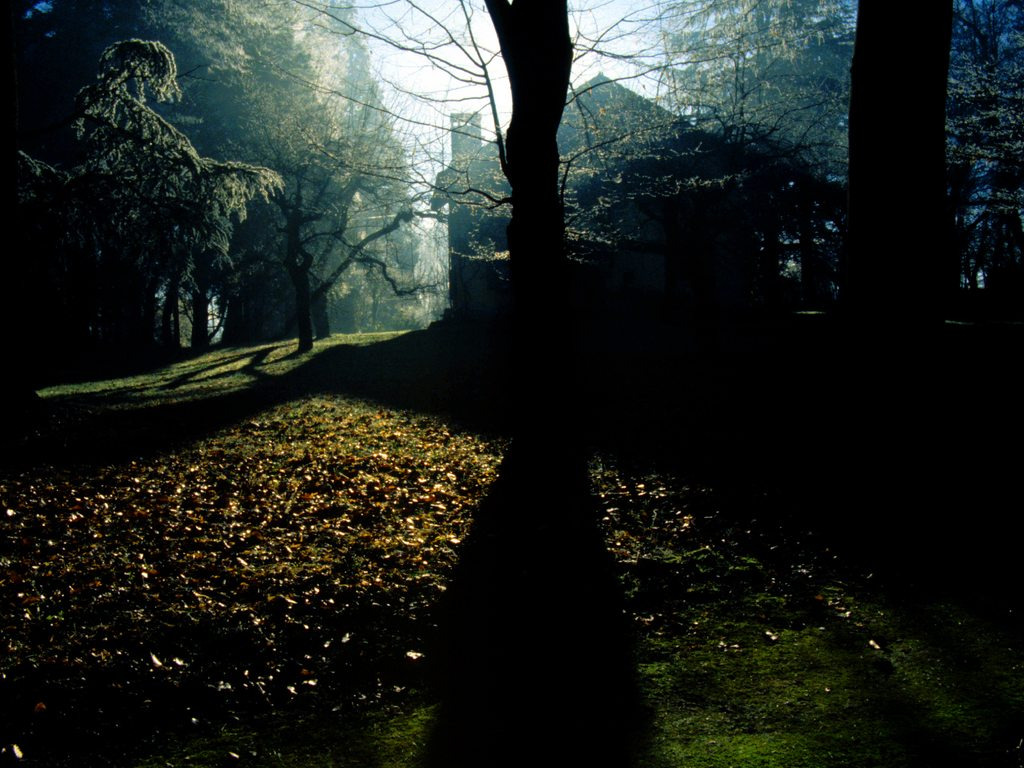 http://www.edenpics.com/pictures/004/en/1024/Edenpics-com_004-069-The-house-Alexander-with-the-shadow-of-a-tree-Switzerland-Geneva-Cologny.jpg