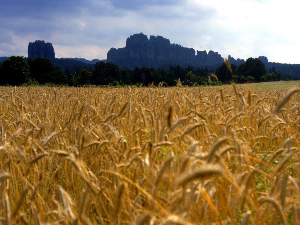 http://www.edenpics.com/pictures/004/en/1024/Edenpics-com_004-073-Falkenstein-and-Schrammsteine-behind-a-wheat-field-Germany-Saxe-National-park.jpg