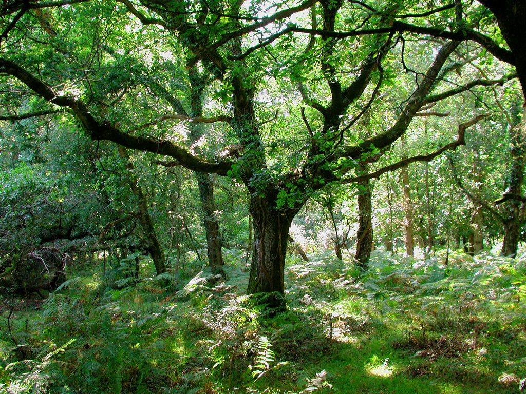 http://www.edenpics.com/pictures/005/en/1024/Edenpics-com_005-027-Tree-and-vegetation-United-Kingdom-England-Dorset-Between-Lymington-and.jpg