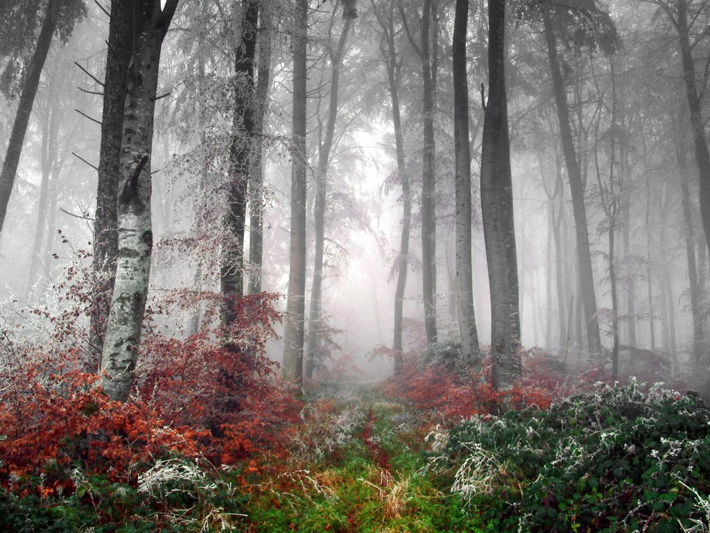 http://www.edenpics.com/pictures/005/en/1024/Edenpics-com_005-057-Forest-with-little-freeze-on-branches-being-in-a-fog-Switzerland-VD-Essertines.jpg
