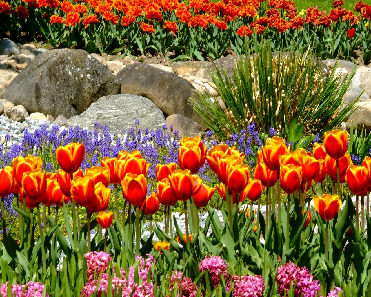 Edenpics natura immagini sfondi gratuite della natura for Immagini per desktop fiori